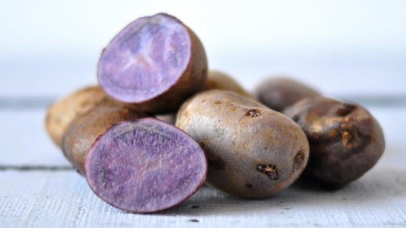 Фиолетовый картофель: сорта и правила выращивания