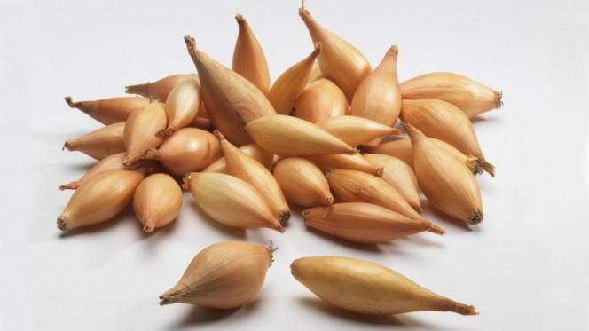 Как хранить лук севок до посадки: советы огородникам