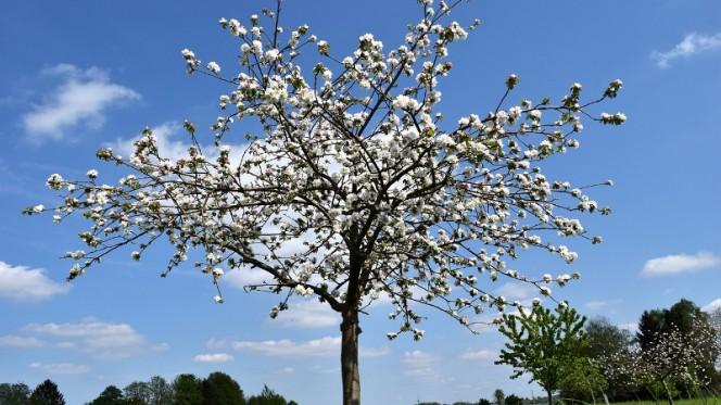 Подкормка вишен – весной, летом и осенью