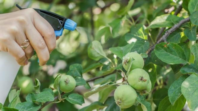 Тля на яблоне: причины появления и способы борьбы