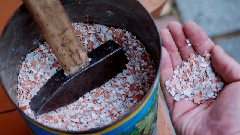 Приготовление удобрений из скорлупы