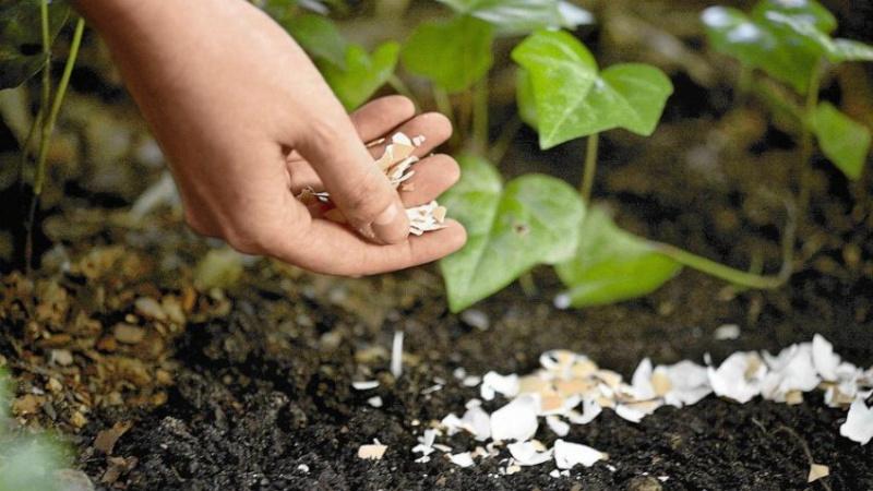Удобрение растений скорлупой