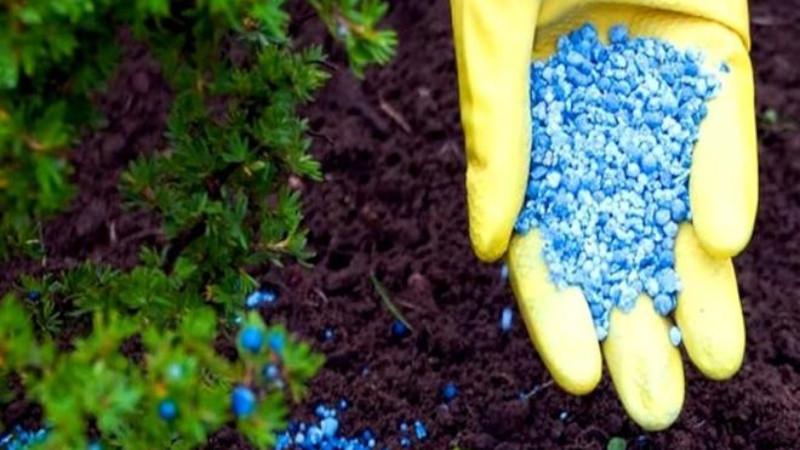Удобрение для кустарников