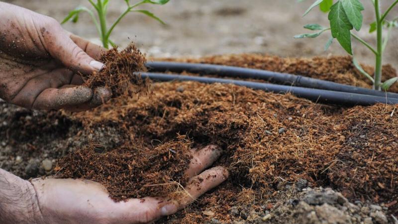 Неудобренная почва