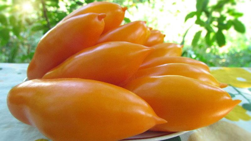 Желтые помидоры Пальмира